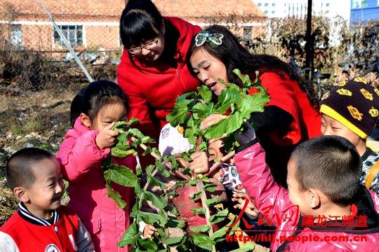 新华幼儿园菜园采摘活动感受多彩秋天
