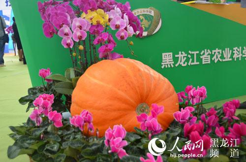 2015黑龙江国际绿色有机食品产业博览会盛装