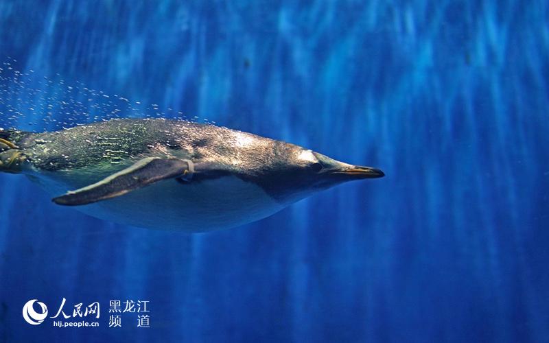 图说龙江:哈尔滨极地馆看极地动物表演