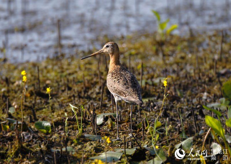 已被列入国家陆生野生动物保护名录以及世
