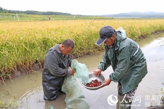 下一步,农场将在北方小龙虾越冬养殖上进行项目技术攻关.
