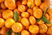 一个橘子5味药 每天一个桔子最防三癌中医认为,桔子具有润肺、止咳、化痰、健脾、顺气、止渴的药效。尤其是老年人、急慢性支气管炎以及心血管病患者,是食用的上乘果品。【详细】卫生健康|健康图集