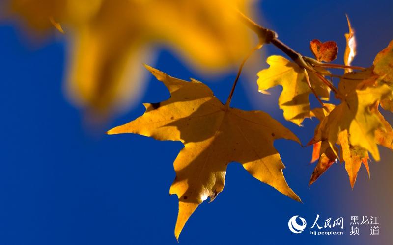 样翩翩起舞,在风中盘旋,又缓缓落下……人们走在铺满落叶的路图片