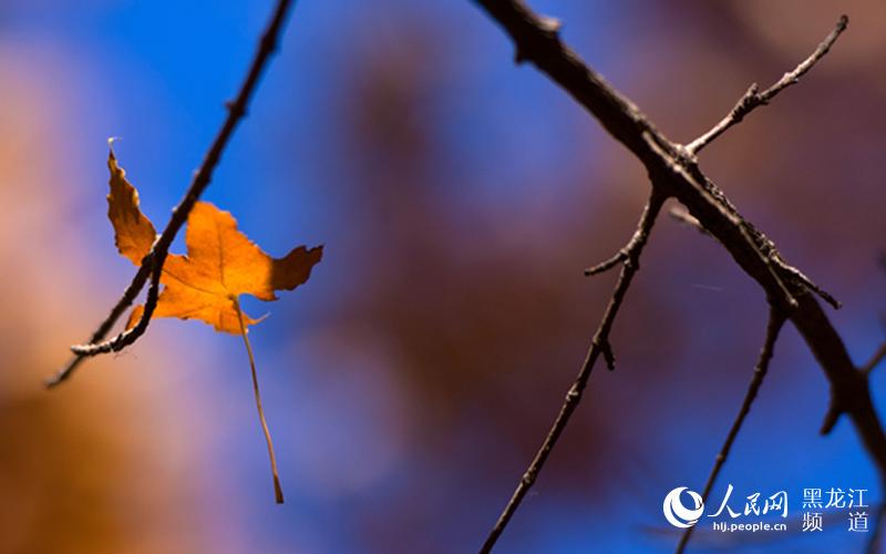 图说龙江 听秋 落叶的声音图片