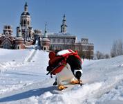 伏尔加庄园迎来极地企鹅