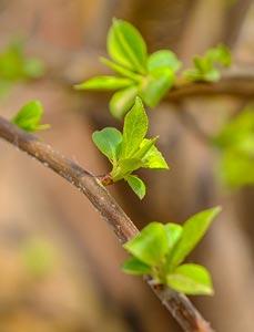 冰城四月春满枝头