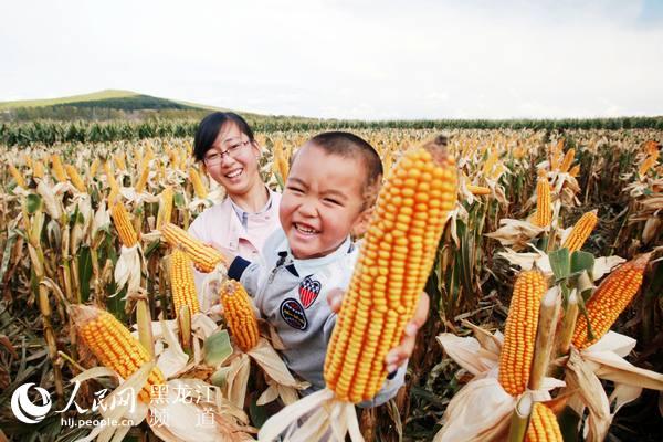 黑龙江省八五一一农场:金色染大地农场喜丰收
