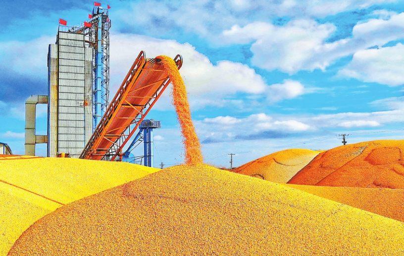 五大连池农场烘干玉米确保粮食品质