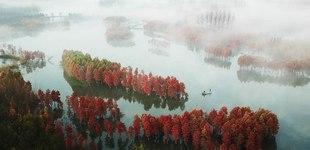 红杉林冬韵