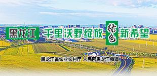 """黑龙江:千里沃野绽放""""绿色""""新希望        黑龙江省农业农村厅与人民网黑龙江频道联合策划,全景展示黑龙江绿色农业发展成果。"""