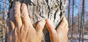 一双手与100万棵树        眼前这双普通的手,满布老茧、粗糙干裂,却几十年如一日,种下了100多万棵树。
