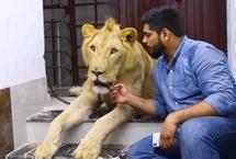 巴基斯坦兄弟饲养雄狮带其驾车出游来自巴基斯坦卡拉奇的两兄弟哈姆撒・侯赛因(Hamzah)和哈桑・侯赛因(Hassan Hussain)有着一位非传统室友:一头名叫辛巴(Simba)的成年非洲雄狮。这对热爱动物的兄弟甚至还开车带辛巴一起旅行。【详细】国际新闻|国际热图