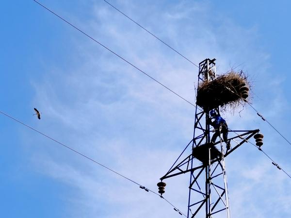 齐齐哈尔供电公司:爱鸟护线齐力